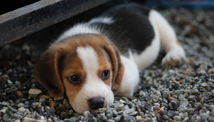 Adoptions Montgomery County Animal Resource Center